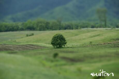 まずは立木!