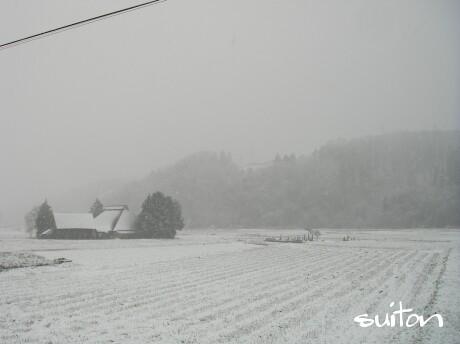 白いですなぁ〜