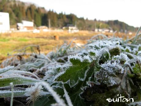 凄い霜です!