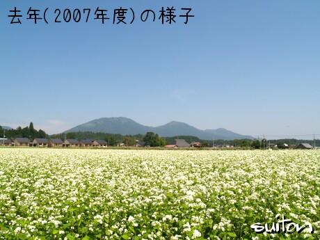 去年(2007年)のそば畑!!