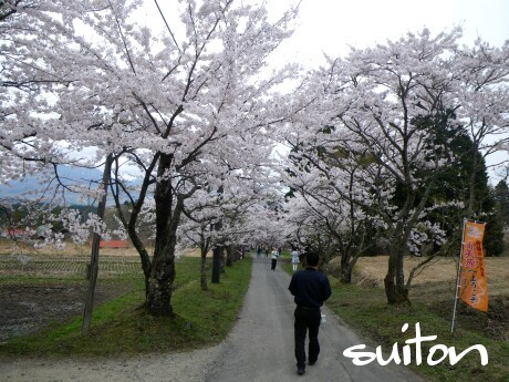茅部神社の桜もとってもいい感じですよねぇ〜